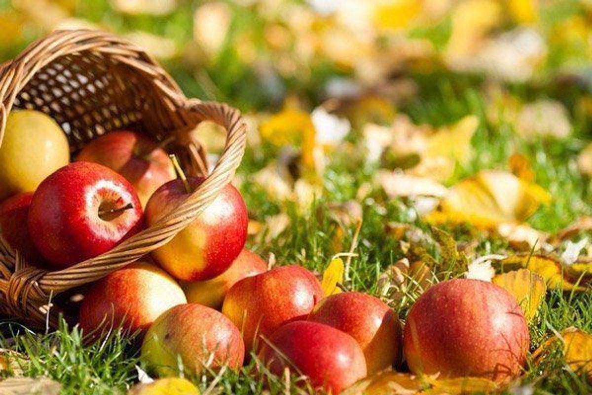 Яблука, сливи, груші та виноград: дієтолог розповіла, чим корисні сезонні фрукти