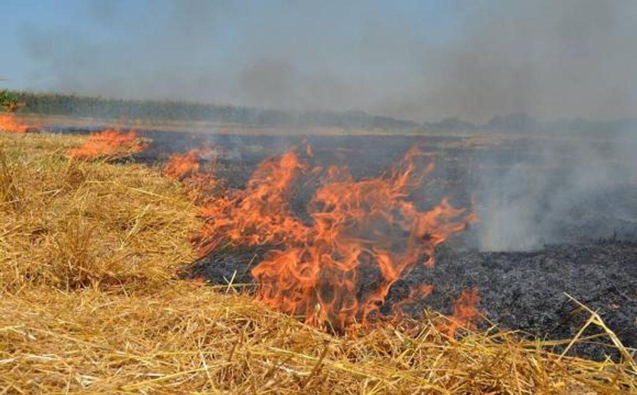 Дим, що поширюється внаслідок спалювання стерні, небезпечний для здоров'я – експерт