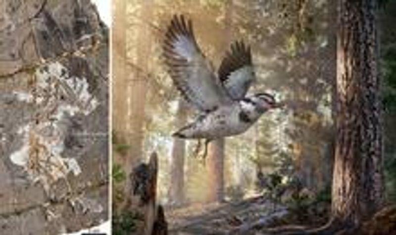 Вчені виявили скам'янілості віком 127 млн років, які допомогли зрозуміти особливості розвитку птахів