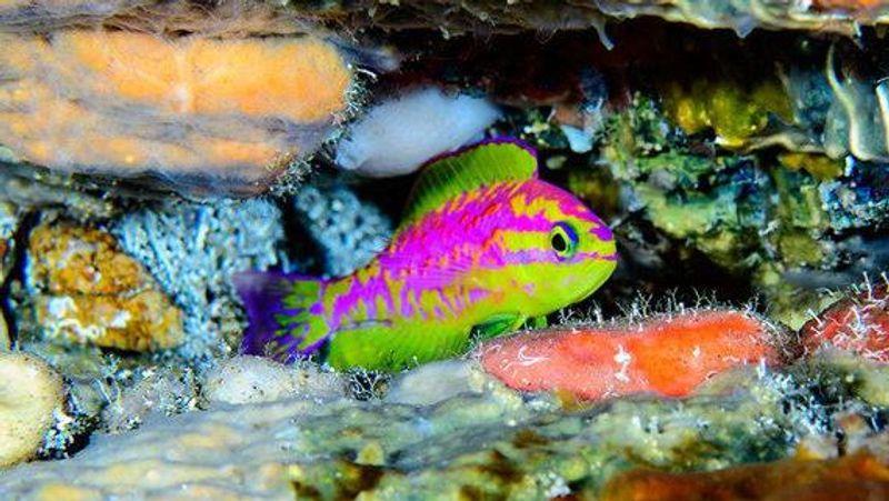 В Атлантичному океані виявили невідомих науці райдужних рибок