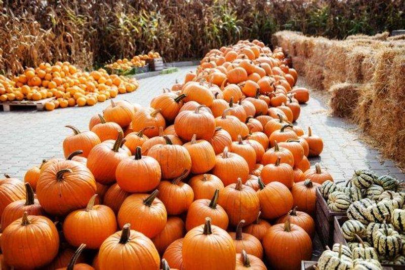 Найкорисніші сезонні продукти осені: як зміцнити імунітет