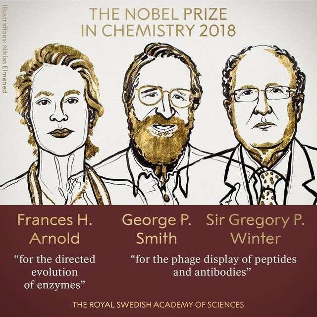 Спрямована еволюція і фаговий дисплей: що саме досліджували нобелівські лауреати з хімії