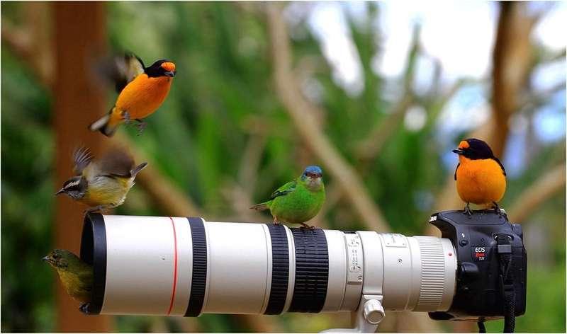 Спостереження за птахами прописують як ліки