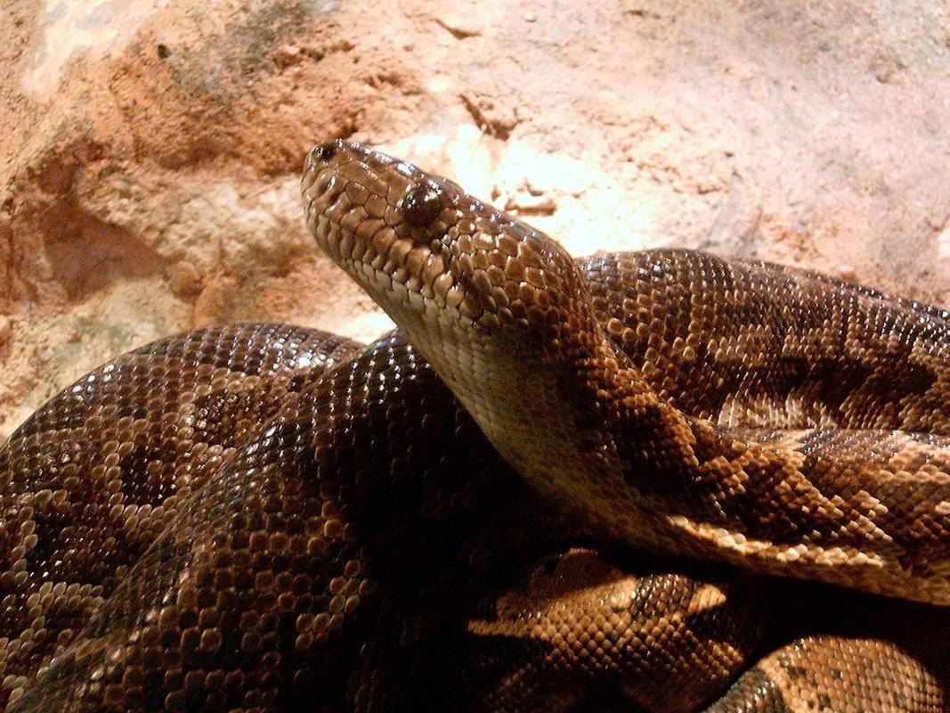 Миколаївський зоопарк почав продавати змій