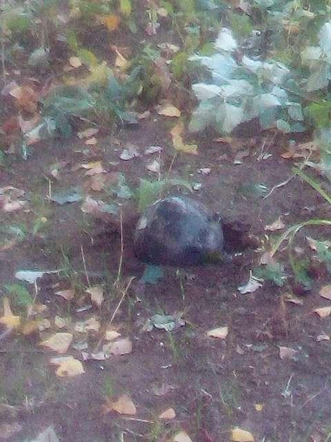 У Лисичанську впала ракета: частина - у парку, інша - біля школи