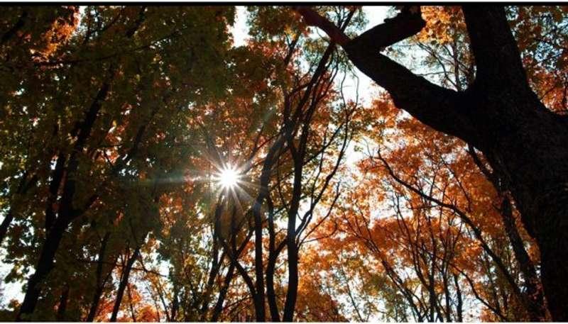 Синоптики обіцяють ще принаймні 5 днів бабиного літа