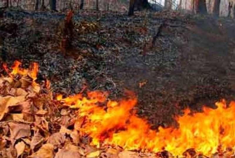 У Києві дрони виявляють паліїв опалого листя