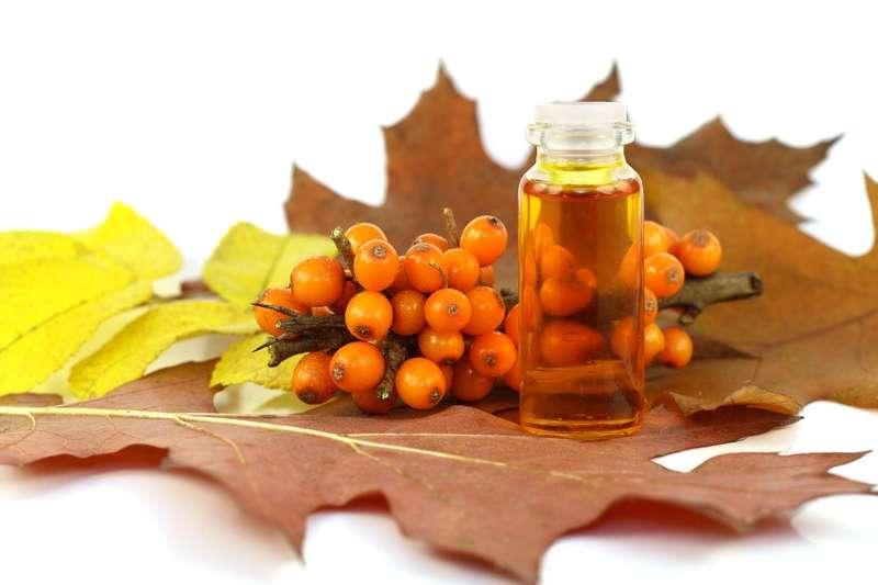 Напій з ягід цієї рослини гальмує процеси старіння та відновлює організм
