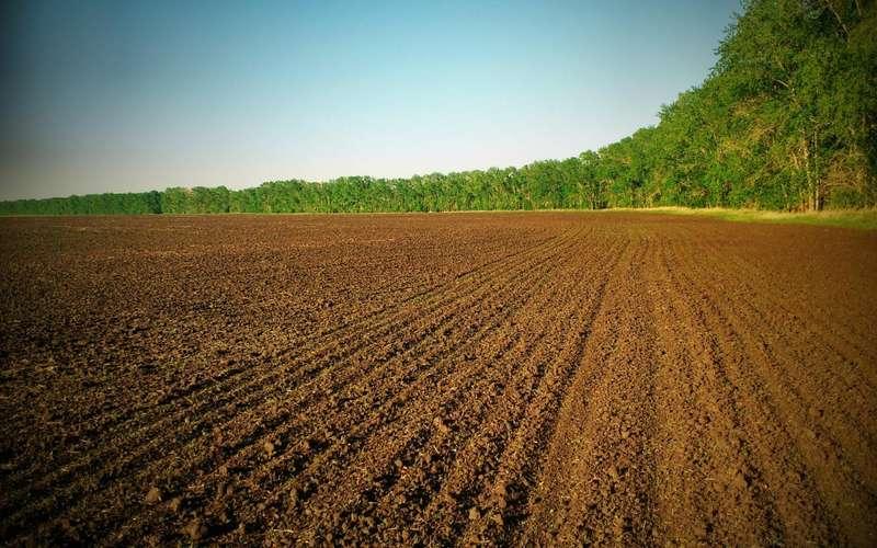Через мораторій на продаж землі, Україна може втратити велику суму грошей