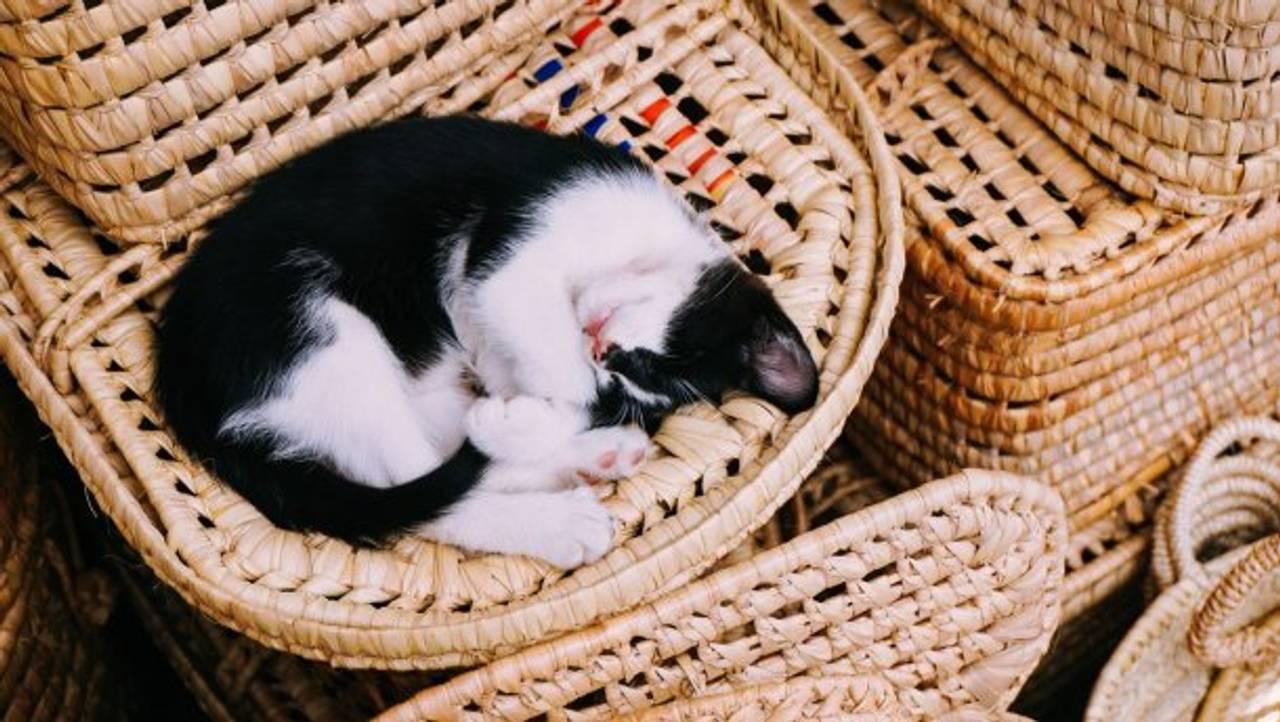 Названо оптимальний час для сну