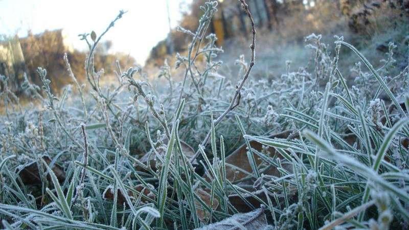 В Україну йдуть перші нічні морози, - Укргідрометцентр