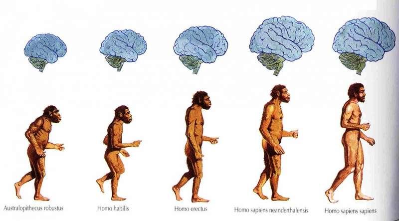 Еволюція триває досі: як змінюється людина у процесі