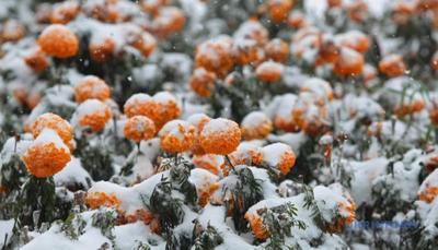 Синоптики попередили, коли Україну занесе снігом і коли негода відступить