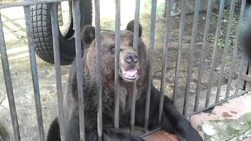 На Харківщині прибиральницю бази відпочинку укусив за ногу ведмідь
