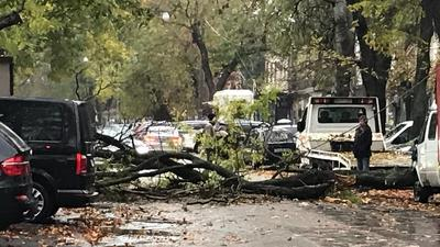 Десяток автомобілів постраждали в Одесі через падіння дерева
