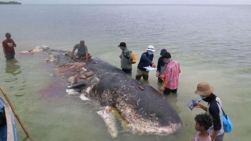 Кашалот загинув у засміченому пластиком океані