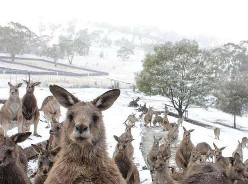 За тиждень до літа Австралію накрила потужна снігова буря (фото)