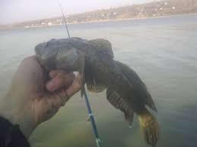 Рибалкам порадили покинути Азовське море