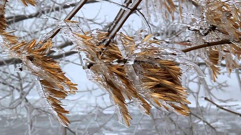 Тріскучий мороз та снігопади: що обіцяють синоптики на останній день осені