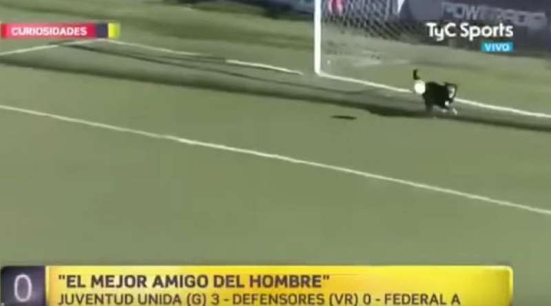 Чотириногий вболівальник врятував аргентинську команду від гола (відео)
