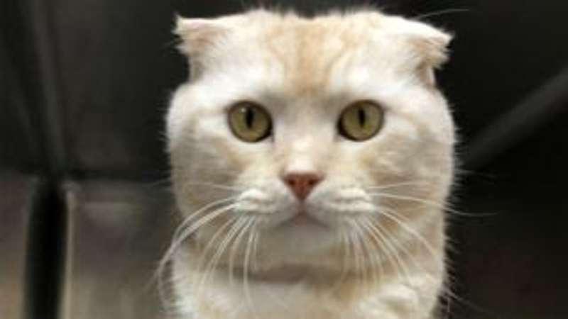 Мешканця Тайваню оштрафували за кота в посилці