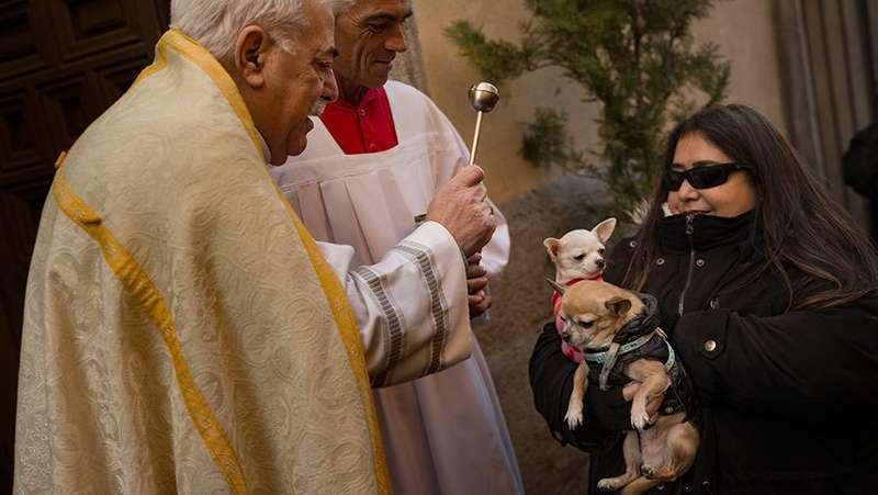 У столиці Іспанії сьогодні благословили тисячі тварин