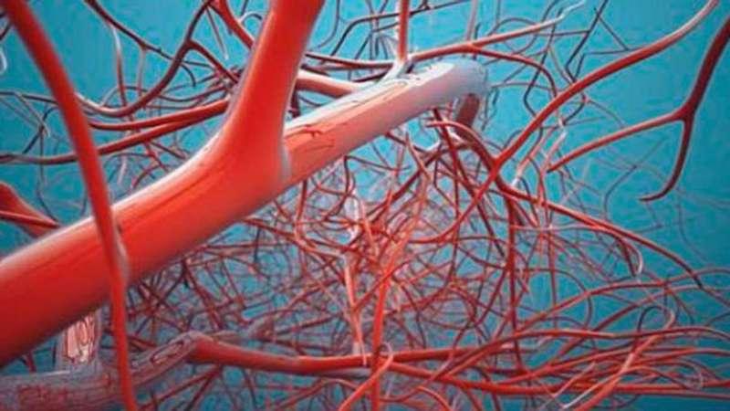 Науковці створили штучні кровоносні судини