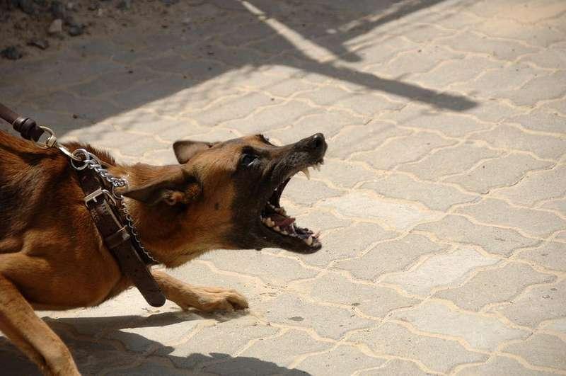 Жінка, на яку напали собаки, отримала компенсацію. Її досвід + декілька порад юриста