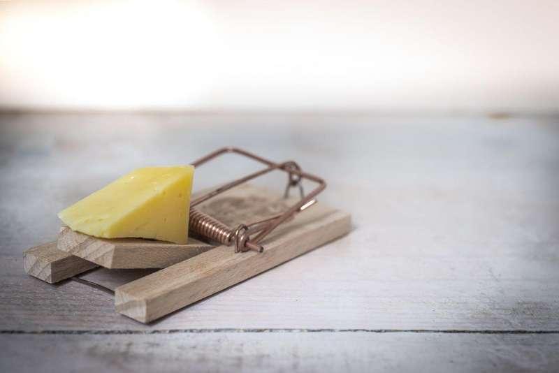 Як суд покарав підприємця, що вирішив доставити для ДНР 398 кілограмів сиру?